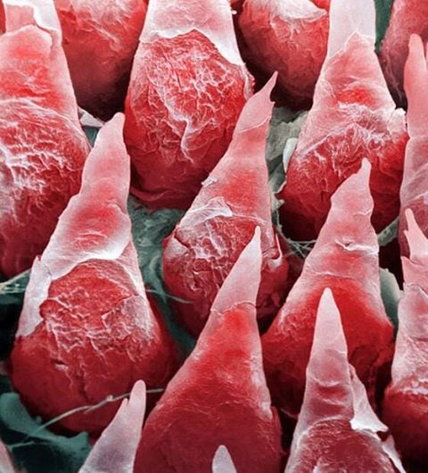 16 phần trên cơ thể trông như thế nào dưới kính hiển vi: Bạn sẽ ngạc nhiên khi nhìn thấy - Ảnh 1.