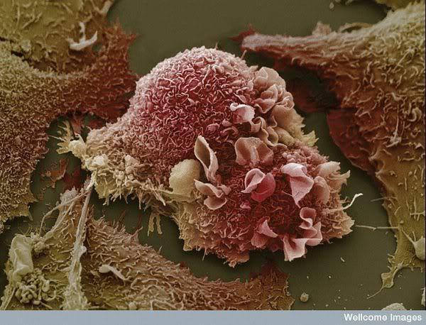 16 phần trên cơ thể trông như thế nào dưới kính hiển vi: Bạn sẽ ngạc nhiên khi nhìn thấy - Ảnh 8.