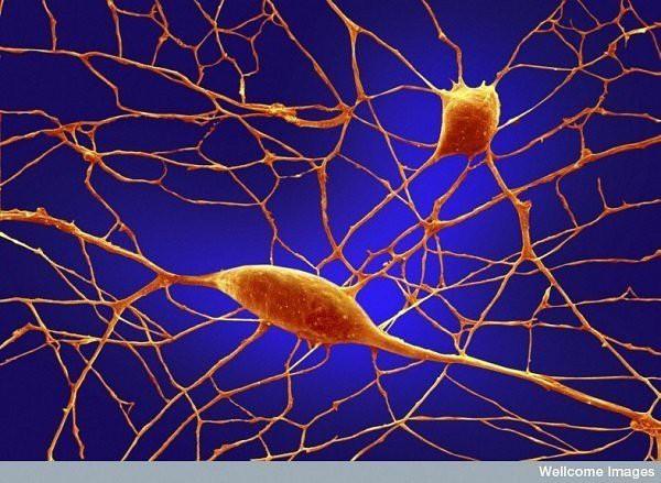 16 phần trên cơ thể trông như thế nào dưới kính hiển vi: Bạn sẽ ngạc nhiên khi nhìn thấy - Ảnh 12.