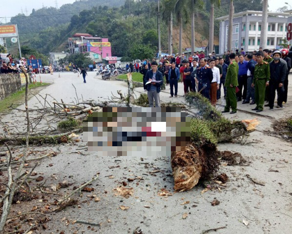 Danh tính nam thanh niên đi bộ bị cành cây gạo gãy rơi trúng tử vong ở Hà Giang - Ảnh 1.