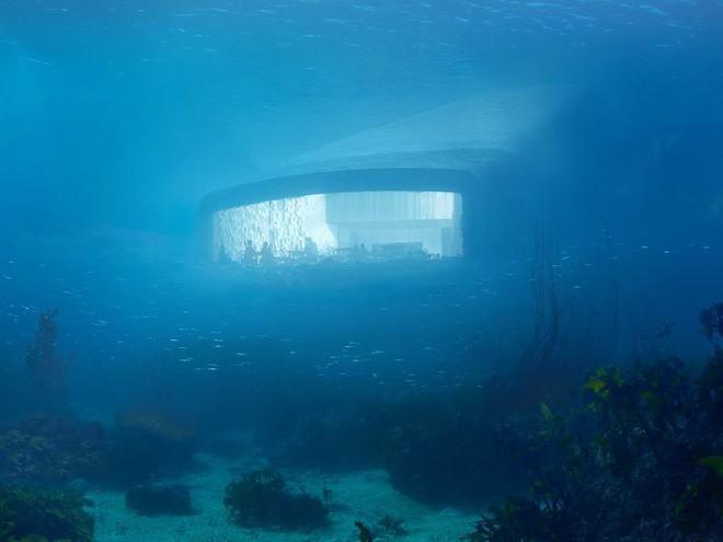 Bên trong nhà hàng dưới nước lớn nhất thế giới, nơi thực khách ngắm sinh vật biển đang bơi trong khi thưởng thức hải sản - Ảnh 3.