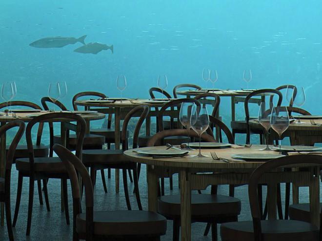Bên trong nhà hàng dưới nước lớn nhất thế giới, nơi thực khách ngắm sinh vật biển đang bơi trong khi thưởng thức hải sản - Ảnh 13.