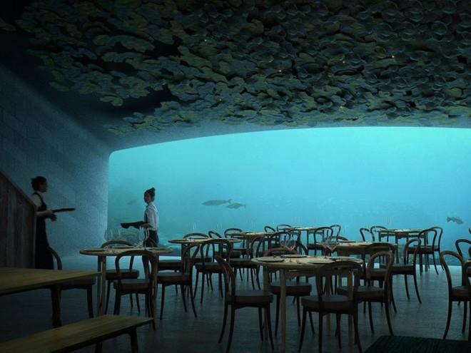 Bên trong nhà hàng dưới nước lớn nhất thế giới, nơi thực khách ngắm sinh vật biển đang bơi trong khi thưởng thức hải sản - Ảnh 12.