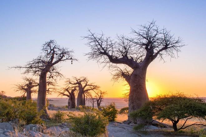 Choáng với sự sống đẹp huy hoàng tại chảo muối được mệnh danh là Vùng đất chết - Ảnh 14.
