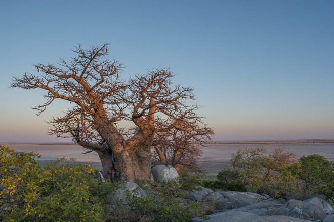 Choáng với sự sống đẹp huy hoàng tại chảo muối được mệnh danh là Vùng đất chết - Ảnh 16.