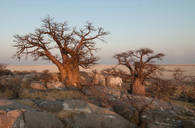 Choáng với sự sống đẹp huy hoàng tại chảo muối được mệnh danh là Vùng đất chết - Ảnh 17.