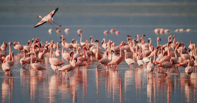 Choáng với sự sống đẹp huy hoàng tại chảo muối được mệnh danh là Vùng đất chết - Ảnh 6.