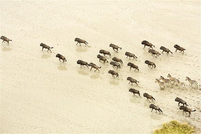 Choáng với sự sống đẹp huy hoàng tại chảo muối được mệnh danh là Vùng đất chết - Ảnh 8.