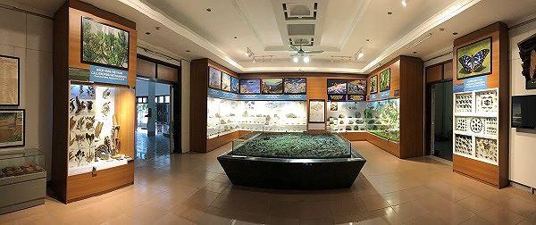 Những mẫu sinh vật rực rỡ trên cao nguyên đá Đồng Văn - Ảnh 12.