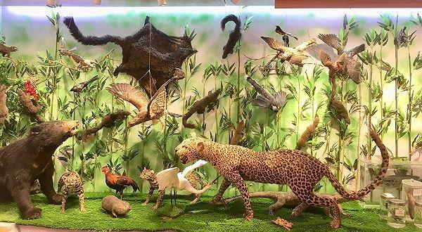 Những mẫu sinh vật rực rỡ trên cao nguyên đá Đồng Văn - Ảnh 4.