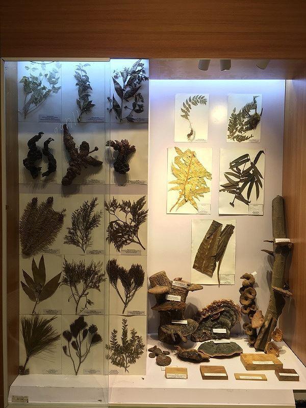 Những mẫu sinh vật rực rỡ trên cao nguyên đá Đồng Văn - Ảnh 5.
