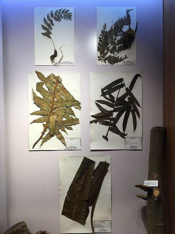 Những mẫu sinh vật rực rỡ trên cao nguyên đá Đồng Văn - Ảnh 6.