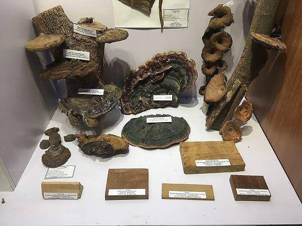 Những mẫu sinh vật rực rỡ trên cao nguyên đá Đồng Văn - Ảnh 7.