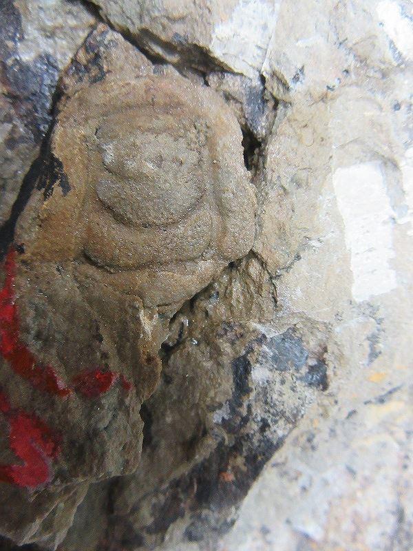 Những mẫu sinh vật rực rỡ trên cao nguyên đá Đồng Văn - Ảnh 8.