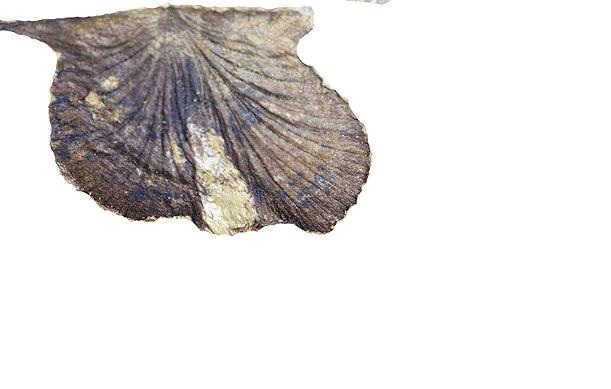 Những mẫu sinh vật rực rỡ trên cao nguyên đá Đồng Văn - Ảnh 9.