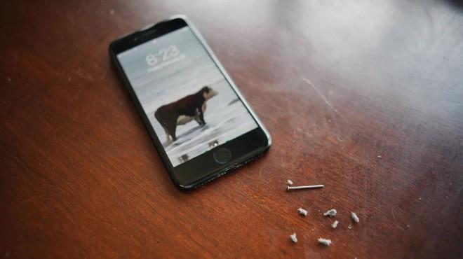Cổng sạc Lightning trong iPhone của bạn có thể đang bị bẩn tới ghê người - Ảnh 1.