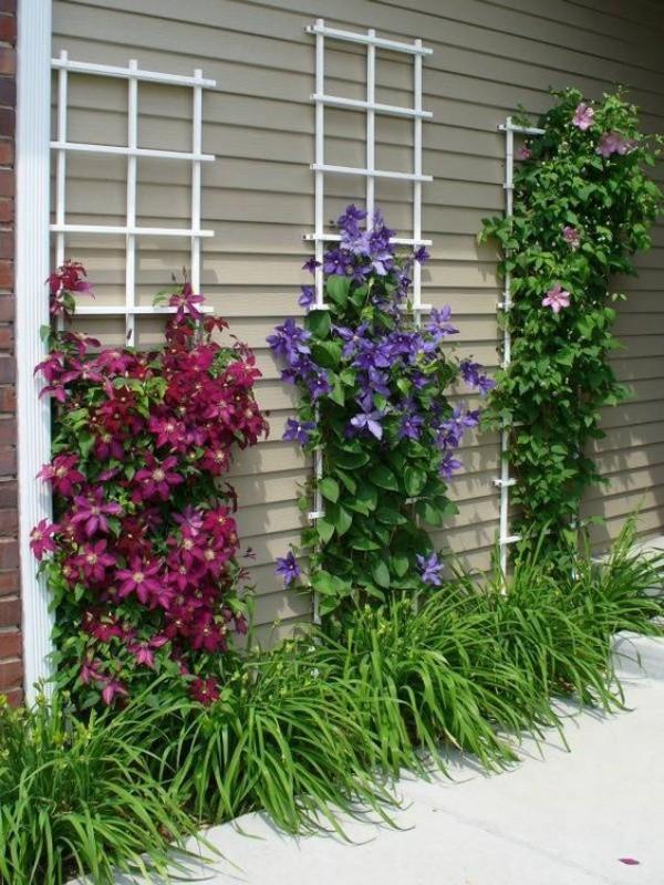 Những mẹo nhỏ giúp cây hoa ông lão trở thành điểm nhấn duyên dáng đặc biệt cho khu vườn - Ảnh 4.