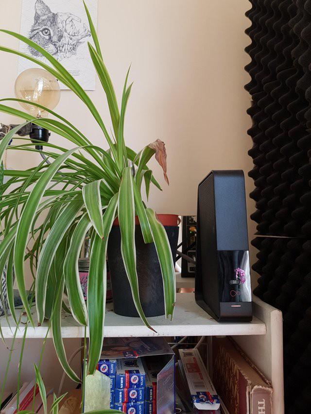 Tấm ảnh gây sốt trên Reddit: Cây đặt cạnh thiết bị phát Wi-Fi không mọc nổi lá, sự thật thế nào? - Ảnh 1.