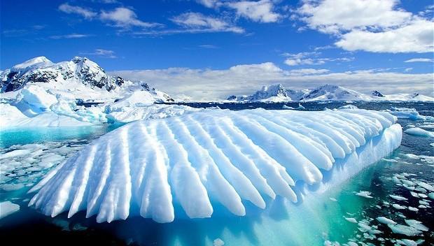 """Phát hiện mẫu hóa thạch """"Vua Nam Cực"""" dưới băng giá - Ảnh 3."""