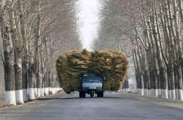 Ảnh: Ngỡ ngàng những chiếc xe chở hàng quá tải, quá khổ khắp thế giới - Ảnh 9.