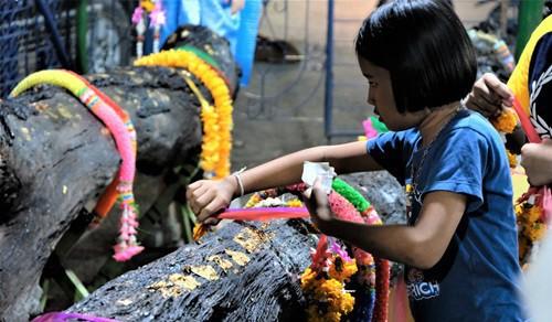Mong trúng xổ số, người Thái đổ xô đến chùa để cúng cầu... thân cây - Ảnh 2.