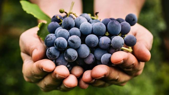 Điểm danh 4 loại trái cây gây nên bao sóng gió trong thần thoại Hy Lạp - Ảnh 10.