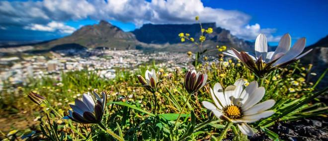 """Kinh ngạc trước """"Vương quốc Hoa"""" phải bị cháy rừng thì mới sống được của Nam Phi: Giàu thực vật gấp 3 lần Amazon ẩm ướt - Ảnh 1."""