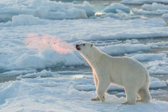 Tin chính thức: Chúng ta không thể làm gì để ngăn nhiệt độ Bắc Cực tăng - Ảnh 2.