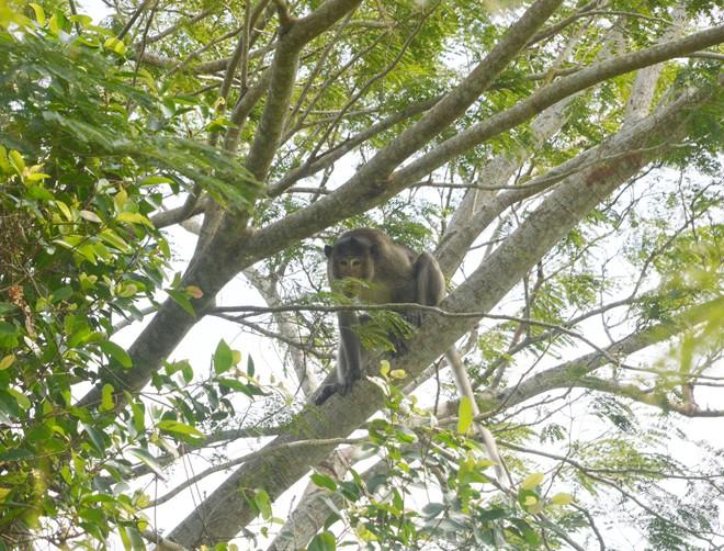 Bé trai 6 tuổi ở Sóc Trăng bị khỉ hoang cắn nhập viện - Ảnh 1.