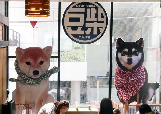 Không đâu như Nhật Bản, quán cà phê mà như sở thú, con gì cũng có! - Ảnh 2.