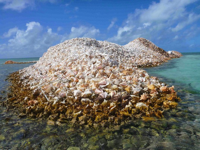 Đây là hòn đảo nhân tạo có một không hai trên thế giới: toàn bộ được làm từ vỏ ốc xà cừ chất thành đống - Ảnh 2.