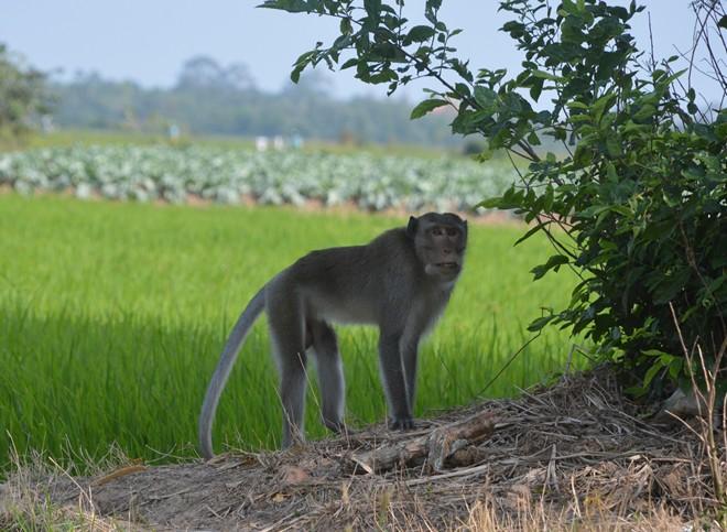 Bé trai 6 tuổi ở Sóc Trăng bị khỉ hoang cắn nhập viện - Ảnh 2.