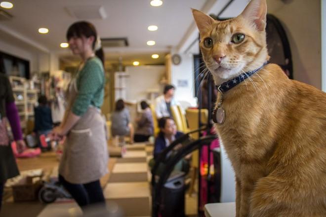 Không đâu như Nhật Bản, quán cà phê mà như sở thú, con gì cũng có! - Ảnh 3.