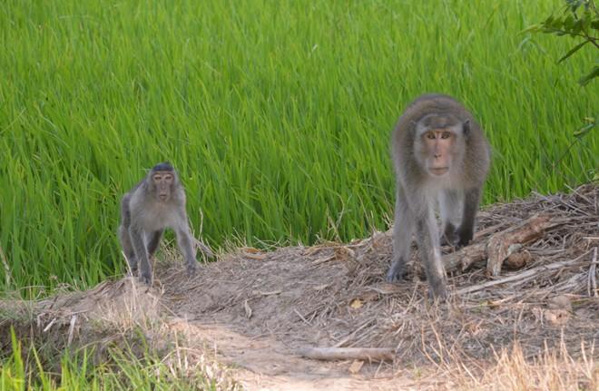 Bé trai 6 tuổi ở Sóc Trăng bị khỉ hoang cắn nhập viện - Ảnh 3.