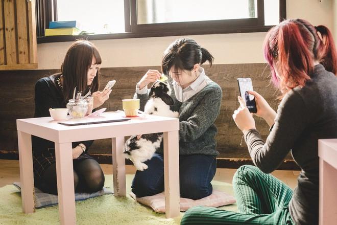 Không đâu như Nhật Bản, quán cà phê mà như sở thú, con gì cũng có! - Ảnh 8.