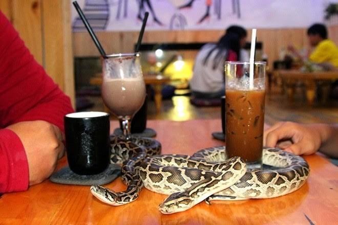 Không đâu như Nhật Bản, quán cà phê mà như sở thú, con gì cũng có! - Ảnh 9.