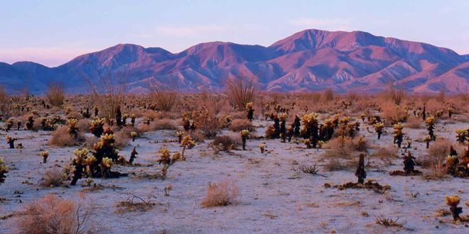 Choáng ngợp trước hiện tượng hoa siêu bung nở cực hiếm gặp, khiến cả sa mạc như sống dậy - Ảnh 6.