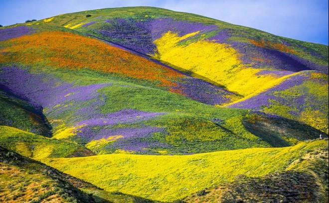 Choáng ngợp trước hiện tượng hoa siêu bung nở cực hiếm gặp, khiến cả sa mạc như sống dậy - Ảnh 8.