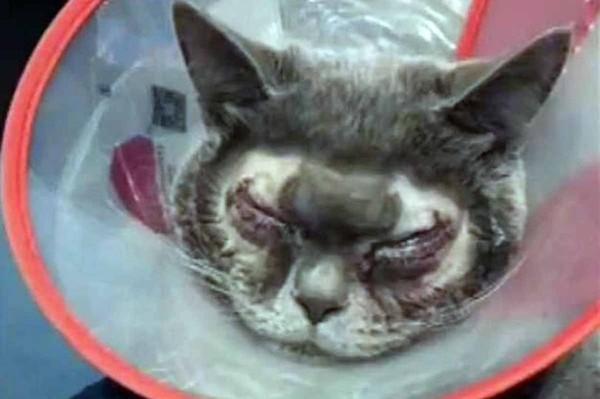 Đưa mèo cưng đi cắt mí, người phụ nữ Trung Quốc bị chỉ trích gay gắt - Ảnh 1.