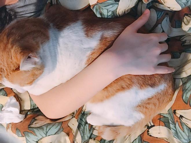"""Sen bị dị ứng lông mèo còn cố nuôi """"quàng thượng"""", cái kết 7 năm tình bạn làm ai cũng xiêu lòng! - Ảnh 4."""