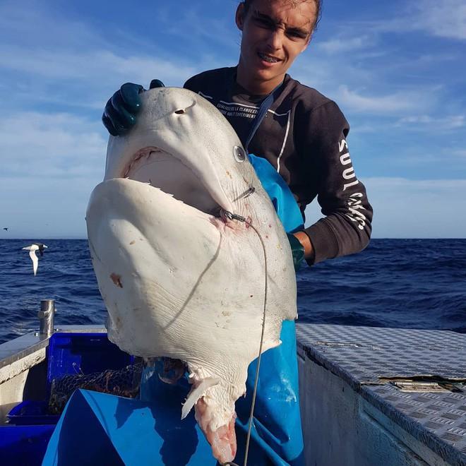 Ngư dân vừa câu được cá mập thì bị thủy quái từ đâu đến giành mất luôn một nửa - Ảnh 2.