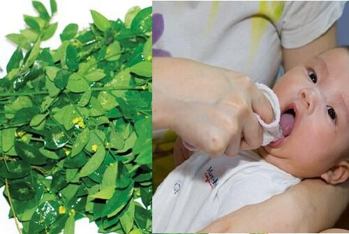 Rau ngót - Cây rau, cây thuốc quý - Ảnh 1.