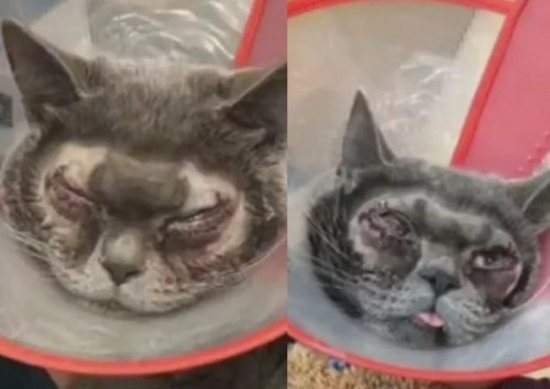 Trung Quốc: Sự thật về vụ nhà giàu chơi trội mang mèo đi phẫu thuật thẩm mỹ mắt - Ảnh 1.
