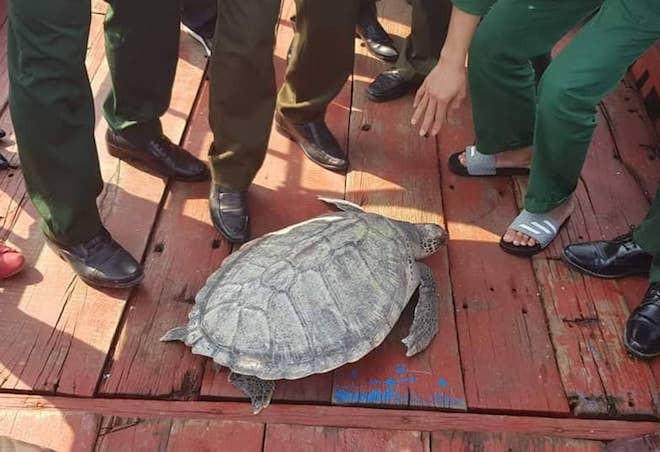 Đi đánh cá bắt được rùa biển quý hiếm đe dọa tuyệt chủng - Ảnh 1.