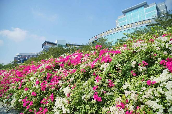 Chụp cả trăm kiểu đều đẹp, đây là giàn hoa được dân sống ảo truy lùng tại một trường đại học ở Việt Nam - Ảnh 1.