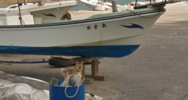 Chú chó Nhật hủy hoại mọi khung hình của Google Street View vì đuổi theo camera - Ảnh 1.