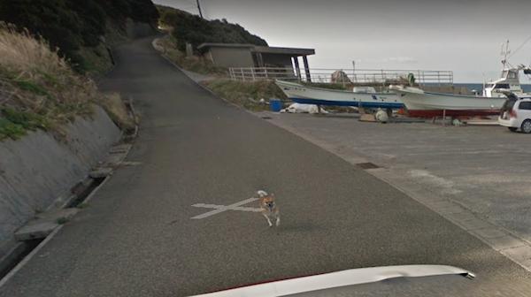 Chú chó Nhật hủy hoại mọi khung hình của Google Street View vì đuổi theo camera - Ảnh 6.