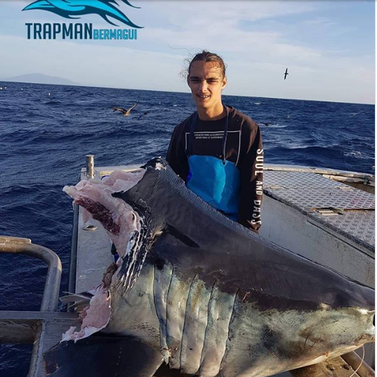 Thủy quái làm thịt cá mập khổng lồ, để lại cái đầu trơ trọi - Ảnh 1.