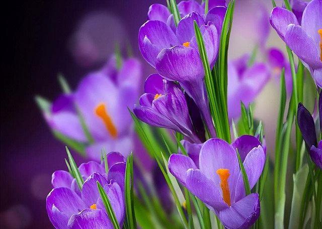 Top 5 loài hoa đắt đỏ nhất hành tinh - Ảnh 1.