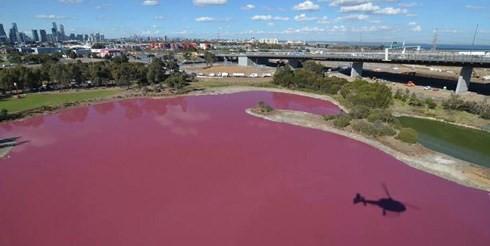 Bí ẩn hồ nước lạ chuyển màu hồng, ùn ùn người kéo đến chụp ảnh - Ảnh 1.